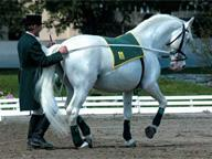 World Cup International Dressage Competition