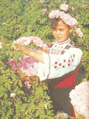 Girl on Rosegathering