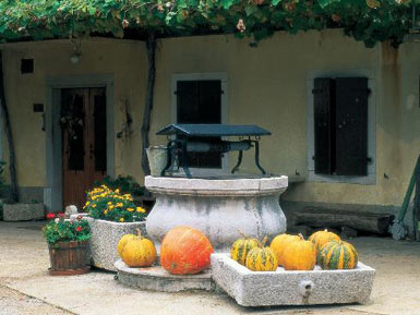 Rural yard with pumpkins